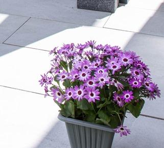 porcelain patio cwmbran